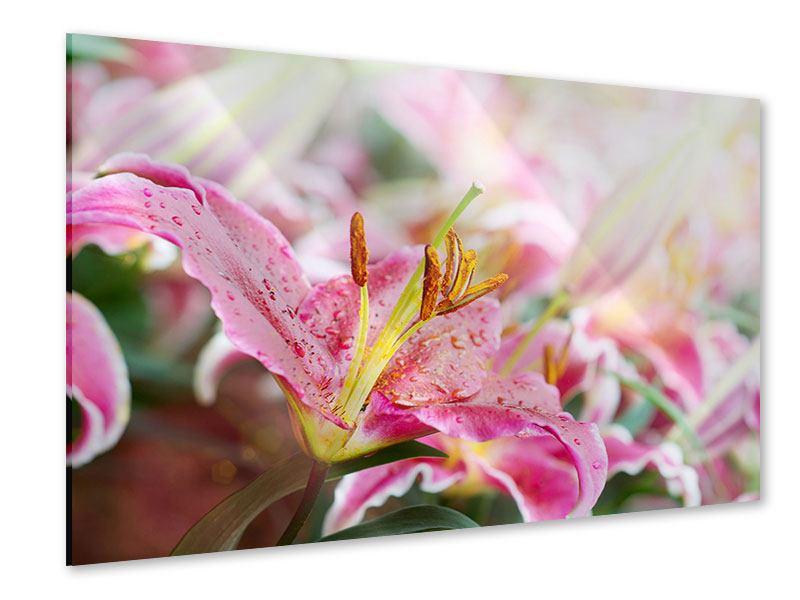 Acrylglasbild Lilien im Tau