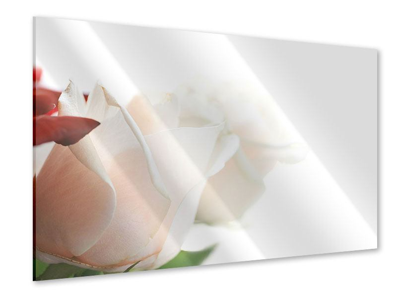 Acrylglasbild Herrliche Rosen