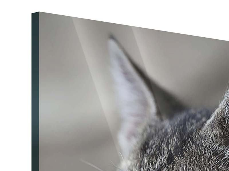 Acrylglasbild Tigerkatze