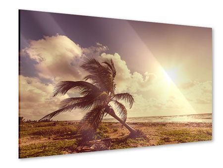 Acrylglasbild Die schiefe Palme