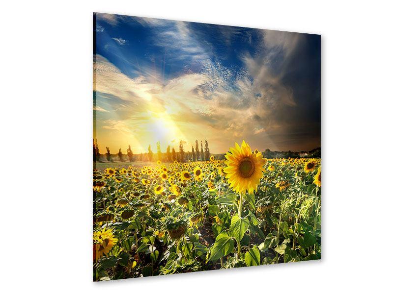 Acrylglasbild Sunny Flowers