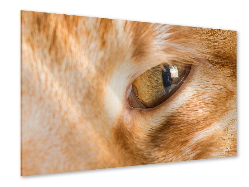 Acrylglasbild Close Up Katze