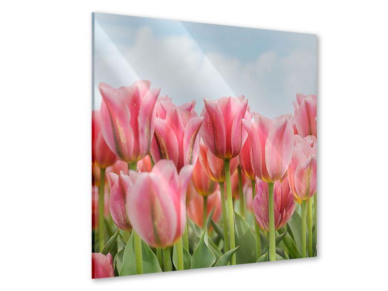 Acrylglasbild Zarte Tulpen