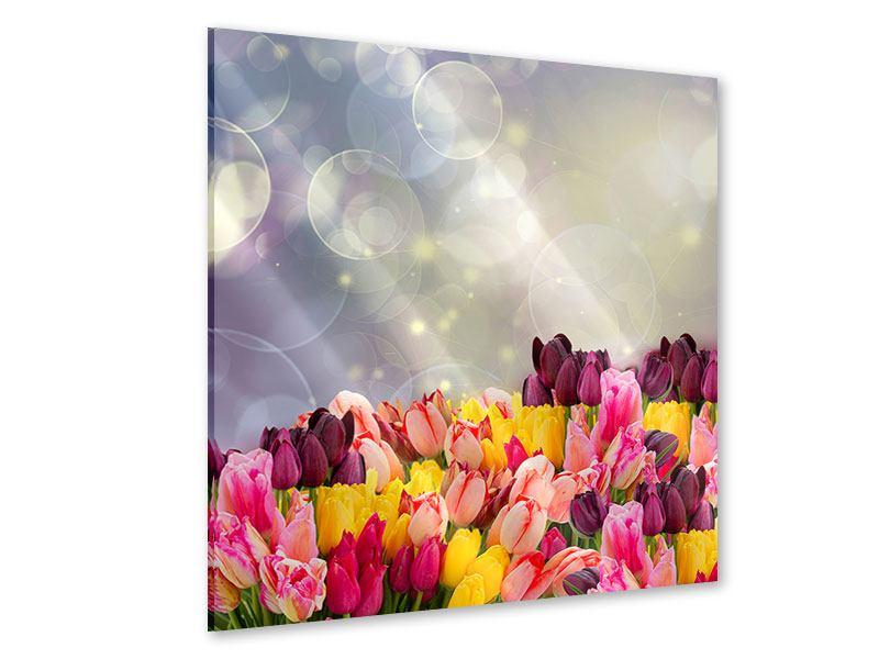 Acrylglasbild Buntes Tulpenbeet im Lichtspiel
