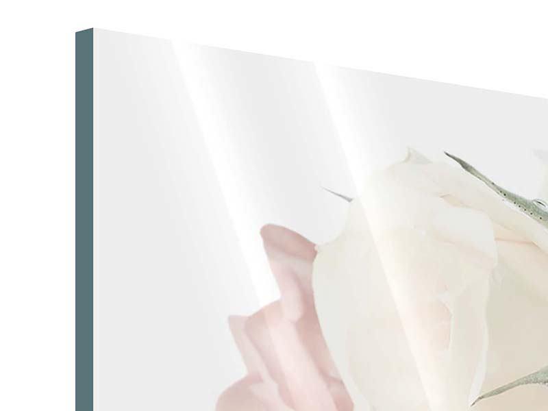 Acrylglasbild Rosenromantik