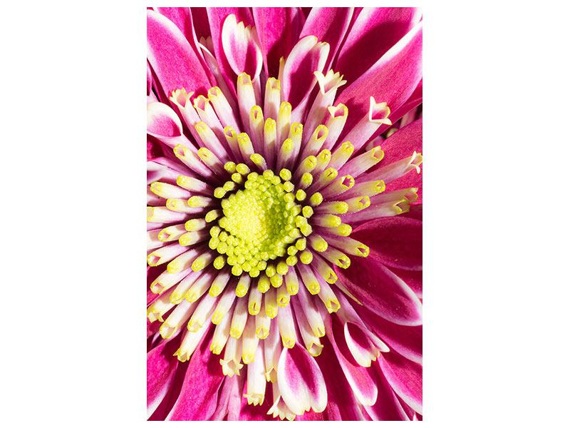 Acrylglasbild Majestätische Lotus