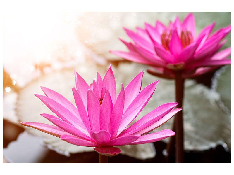 Acrylglasbild Lotus-Duo