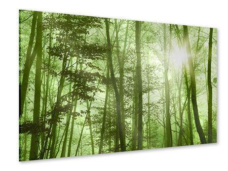 Acrylglasbild Nibelungenwald