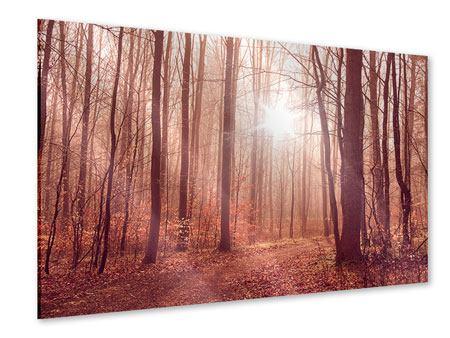 Acrylglasbild Sonnenuntergang im Herbstwald