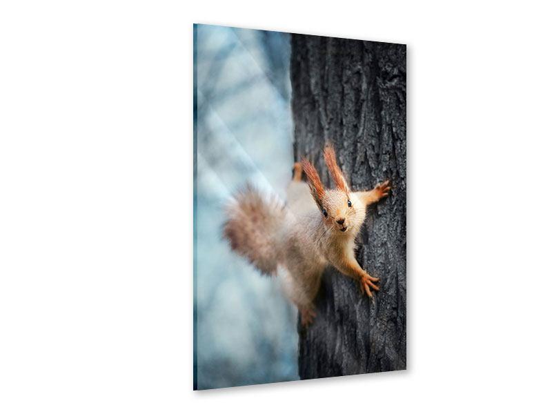 Acrylglasbild Das Eichhörnchen