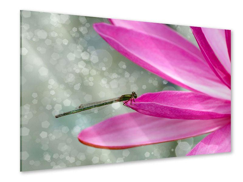 Acrylglasbild Libelle auf dem Seerosenblatt