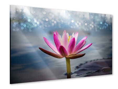 Acrylglasbild Lotus im Morgentau