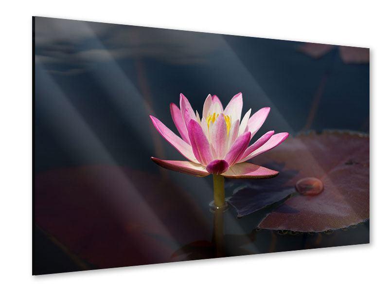 Acrylglasbild Seerose in der Abenddämmerung