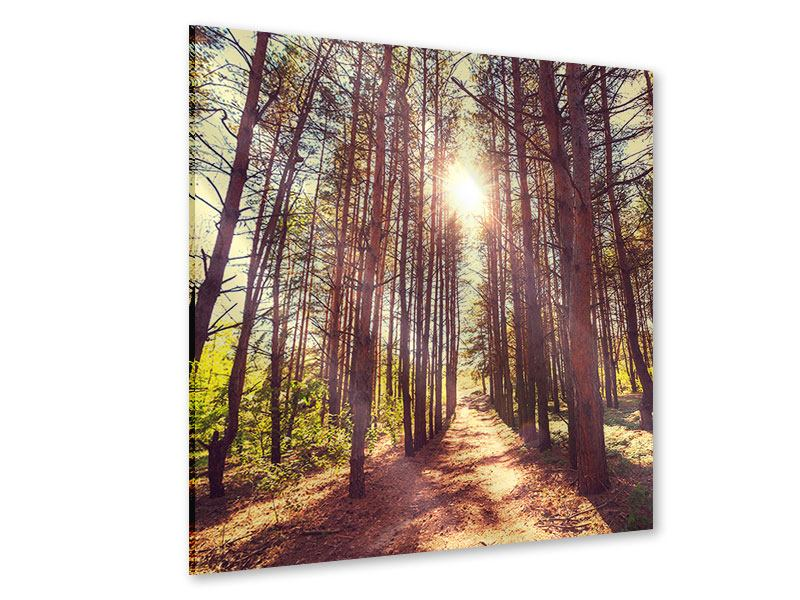 Acrylglasbild Licht am Ende des Waldweges