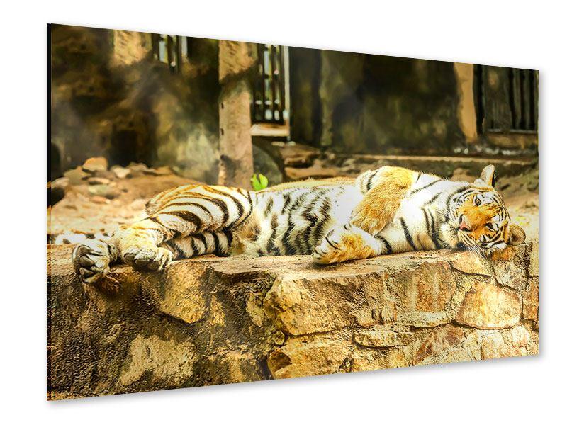 Acrylglasbild Der Sibirische Tiger
