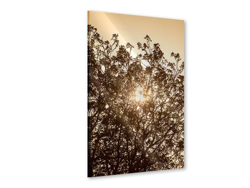 Acrylglasbild Das Licht im Baum