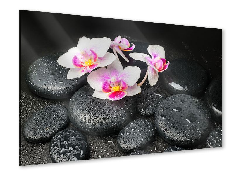 Acrylglasbild Feng-Shui-Orchidee Zen