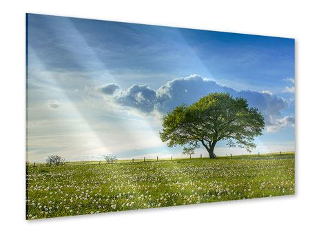 Acrylglasbild Frühlingsbaum