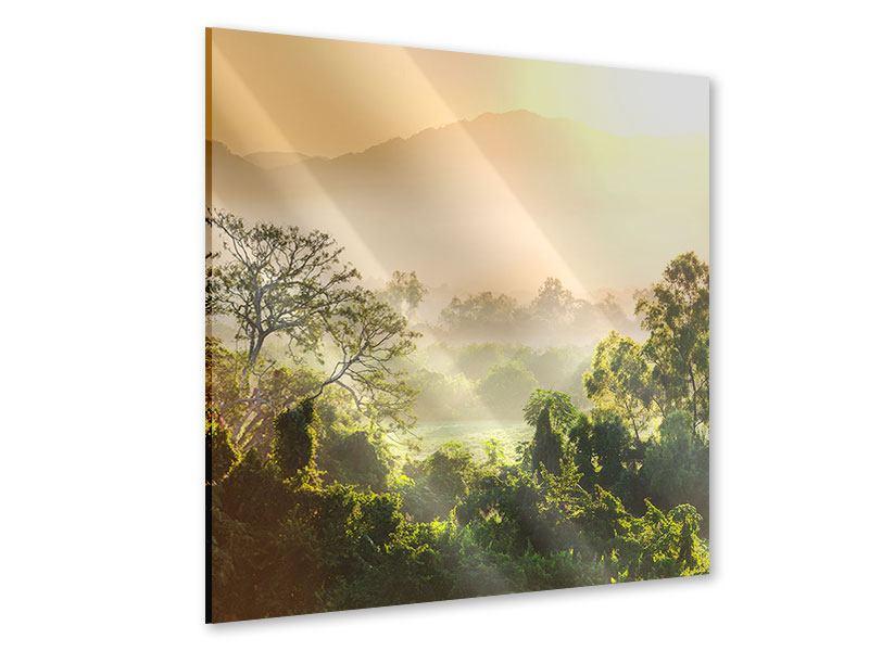 Acrylglasbild Lichtspiel im Wald