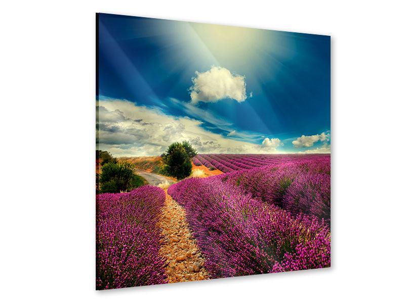 Acrylglasbild Das Lavendeltal