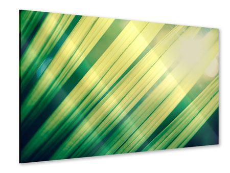 Acrylglasbild Beleuchtetes Palmblatt