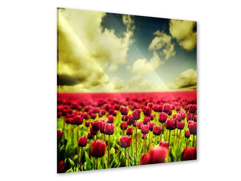 Acrylglasbild Ein Tulpenfeld