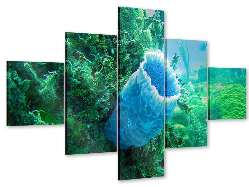 Acrylglasbild 5-teilig Korallen