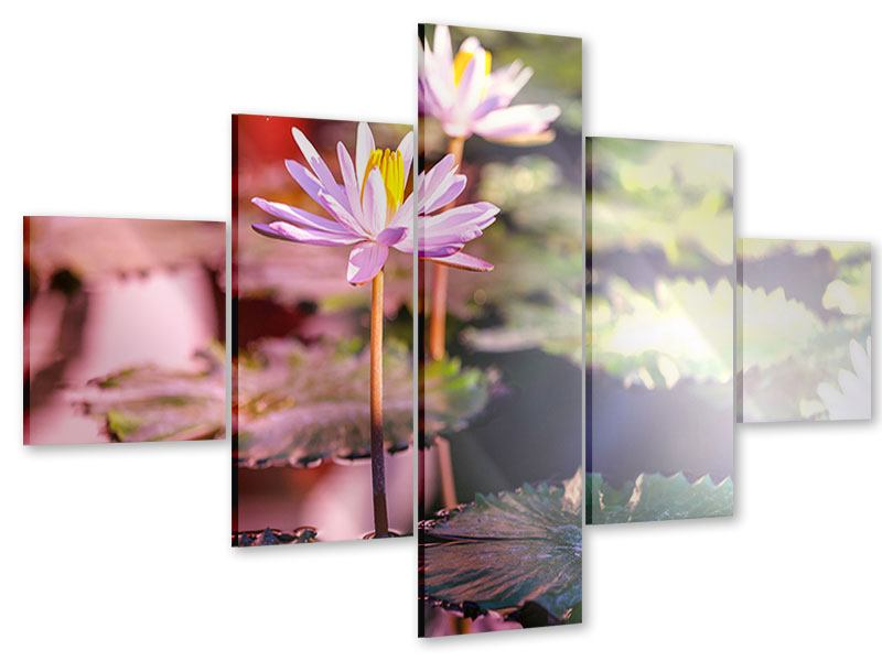 Acrylglasbild 5-teilig Seerosen im Teich