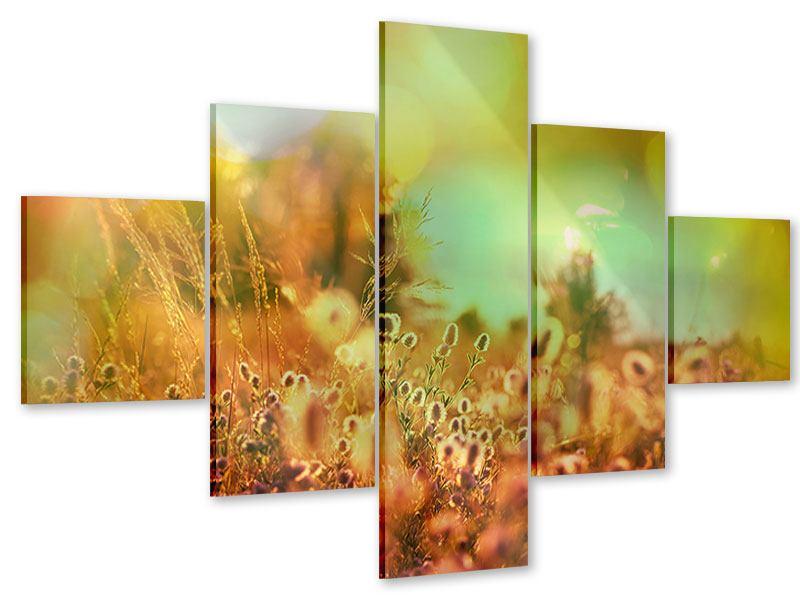 Acrylglasbild 5-teilig Blumenwiese in der Abenddämmerung
