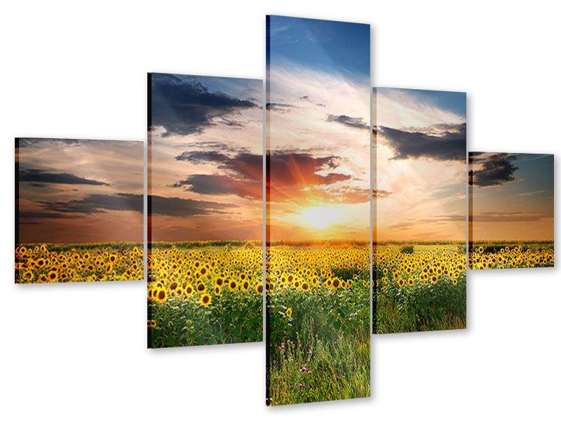Acrylglasbild 5-teilig Ein Feld von Sonnenblumen