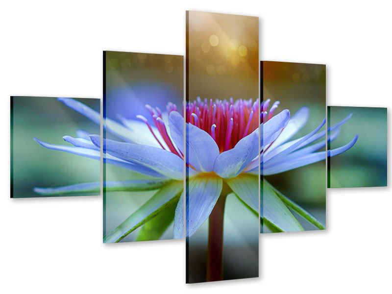 Acrylglasbild 5-teilig Pretty Lotus