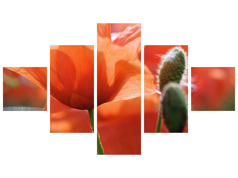 Acrylglasbild 5-teilig Klatschmohn XXL