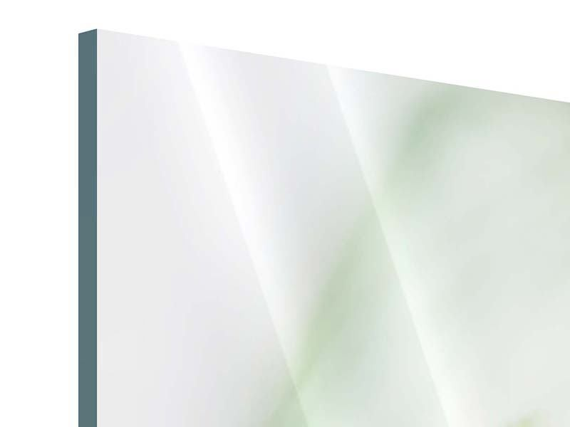 Acrylglasbild 5-teilig XXL Pastinak