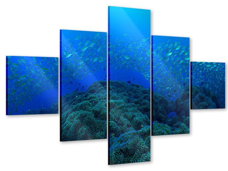 Acrylglasbild 5-teilig Fischschwärme