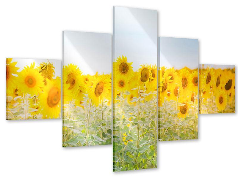 Acrylglasbild 5-teilig Im Sonnenblumenfeld