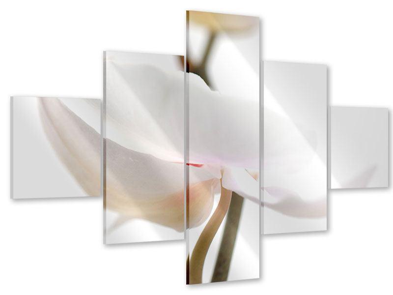 Acrylglasbild 5-teilig XXL Orchideenblüte