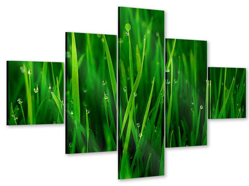 Acrylglasbild 5-teilig Gras mit Morgentau