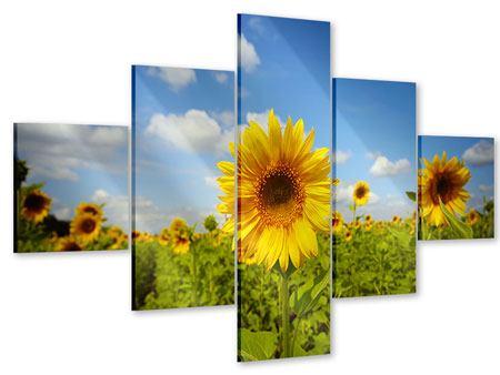 Acrylglasbild 5-teilig Sommer-Sonnenblumen