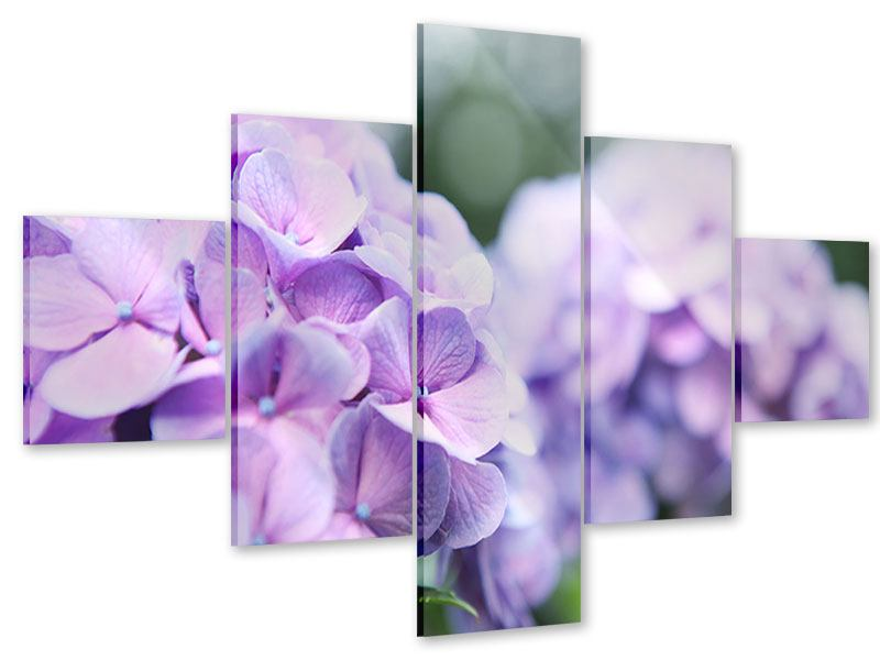 Acrylglasbild 5-teilig Hortensien