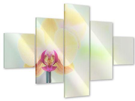 Acrylglasbild 5-teilig Lovely Orchidee