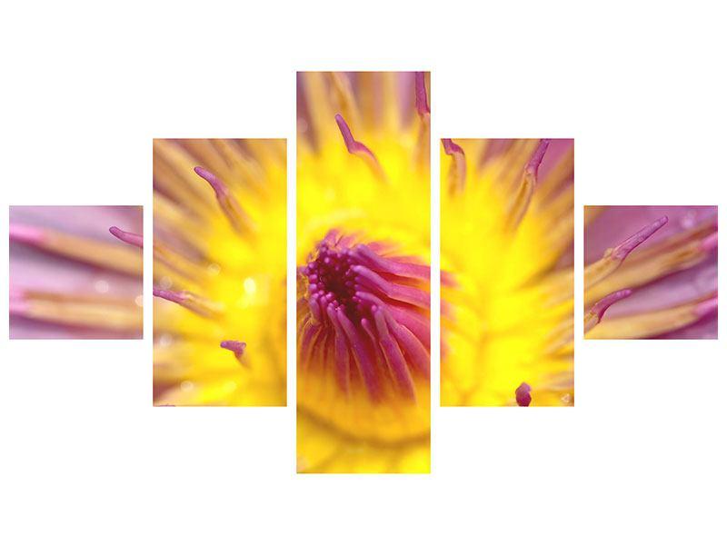 Acrylglasbild 5-teilig XXL-Lotus