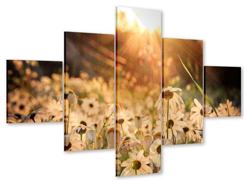 Acrylglasbild 5-teilig Gänseblümchen bei Sonnenuntergang