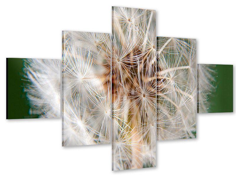 Acrylglasbild 5-teilig Riesenlöwenzahn