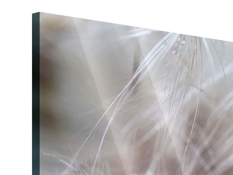 Acrylglasbild 5-teilig Close up Blütenfasern
