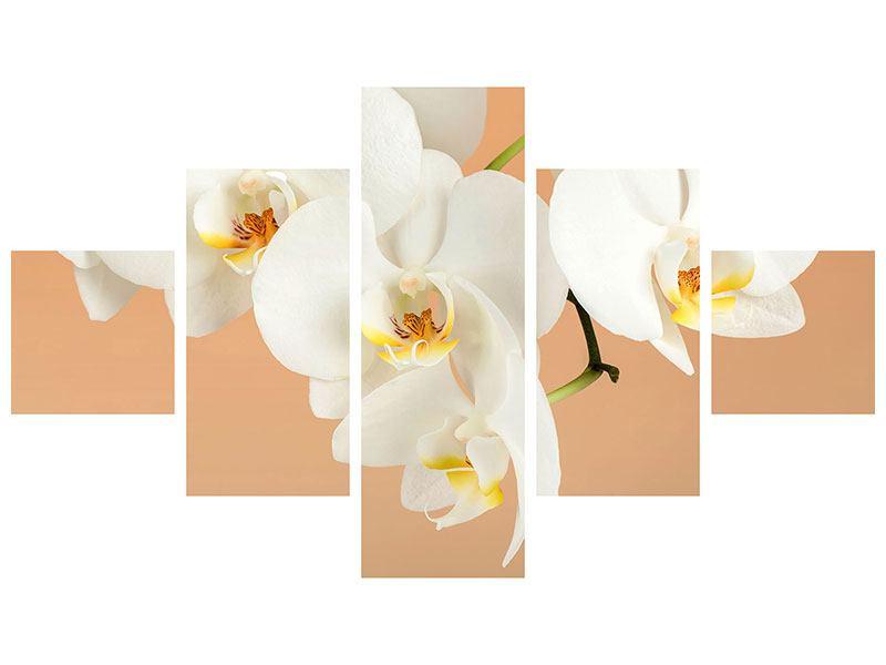 Acrylglasbild 5-teilig Weisse Orchideenblüten