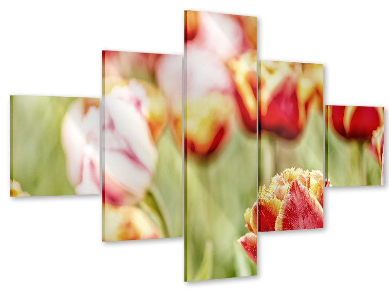 Acrylglasbild 5-teilig Die Schönheit der Tulpe