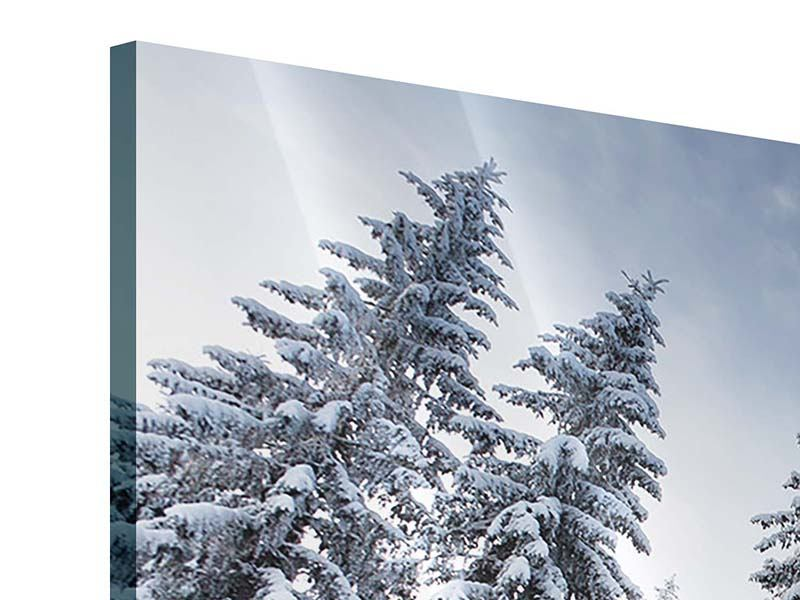 Acrylglasbild 5-teilig Wintertannen