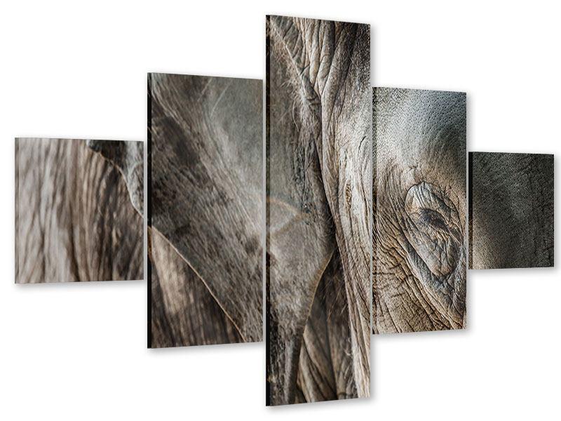 Acrylglasbild 5-teilig Close Up Elefant