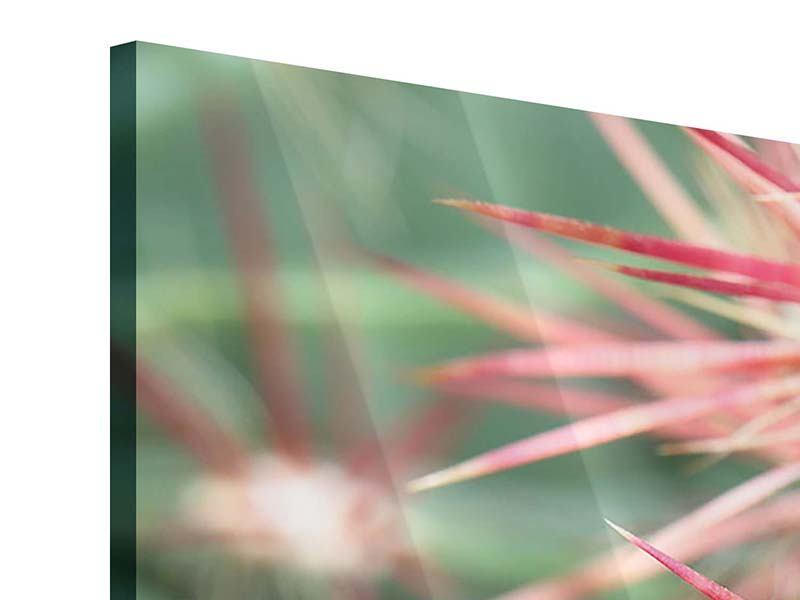 Acrylglasbild 5-teilig Die Kaktusblüte