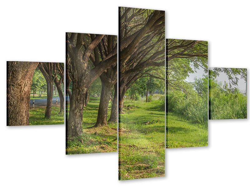Acrylglasbild 5-teilig Alter Baumbestand